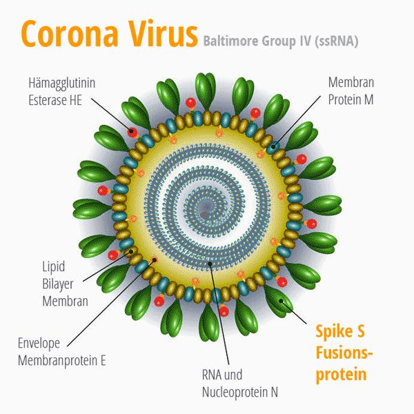 Corona Virus mit Strukturproteinen. © foodfibel.de und moonnonn 123rf.com .